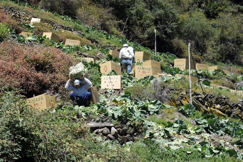 目前許多農業耕作的方式,不管在高山或是平地都是反其道而行的。包括政府在內的所有人...