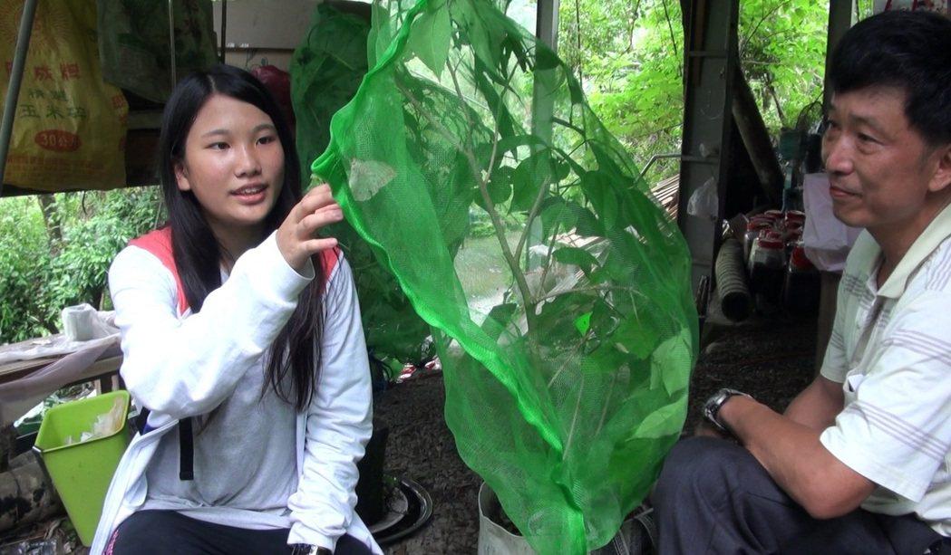 陳良庸(右)買地帶女兒種蜜源植物、復育蝴蝶,曾被鄰居笑「頭殼壞了!」 記者卜敏正...