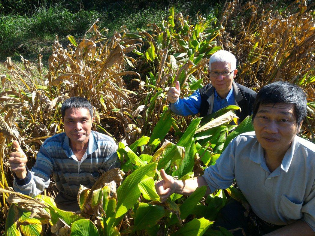 瑞芳農友栽種有機蔬果、取得驗證,試種薑黃熟成,意外發現雙溪氣候適合薑黃生長,更堅...