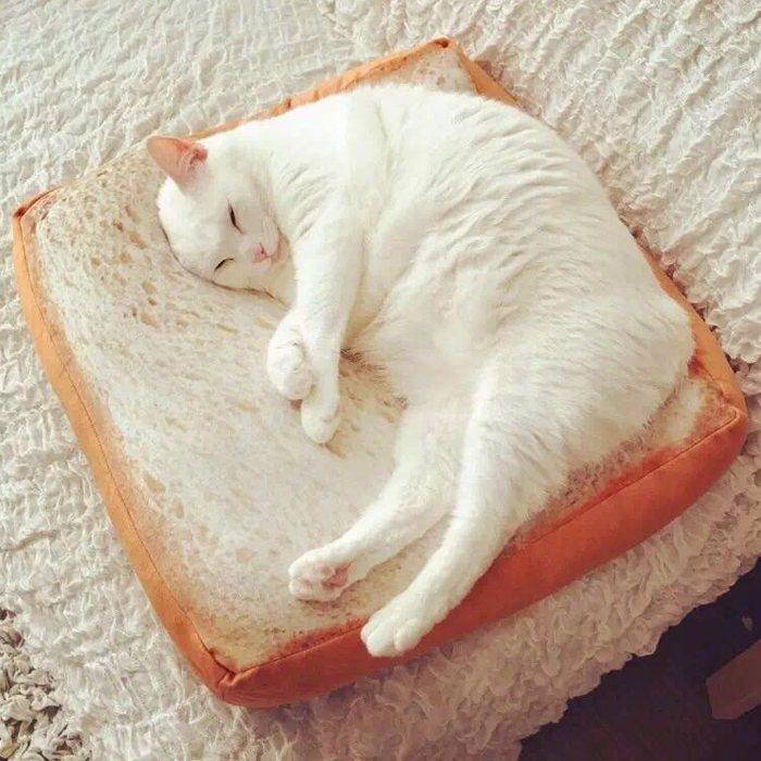 羨慕貓咪放鬆大睡嗎?「腿不寧症候群」患者,可試試芳香療法。 圖/取自網路