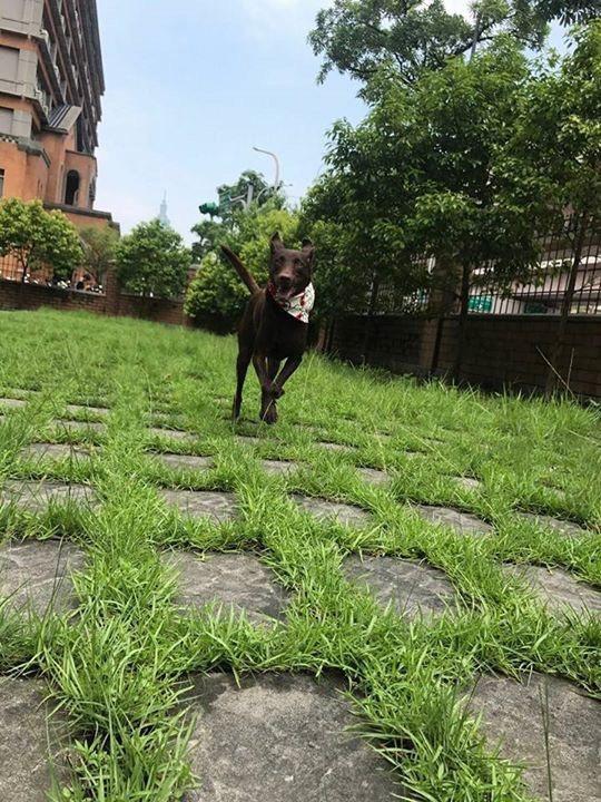蕭敬騰的領養犬咖啡。圖/摘自臉書