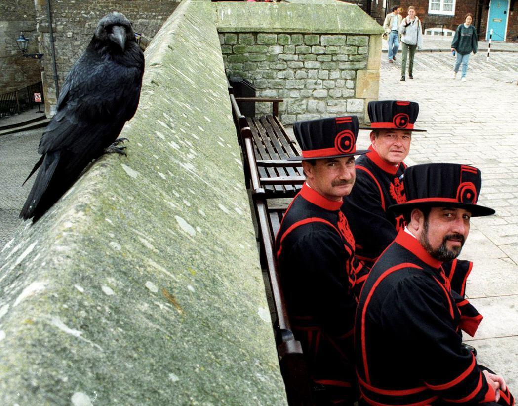傳說若烏鴉從倫敦塔飛走,英國便會覆滅。為了不讓烏鴉飛走,必須要由烏鴉大師照顧。 ...