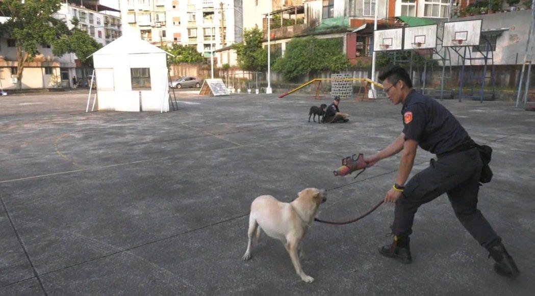 台中市保大特警與待訓犬隻一起遊戲、生活,培養感情。圖/台中市警局提供