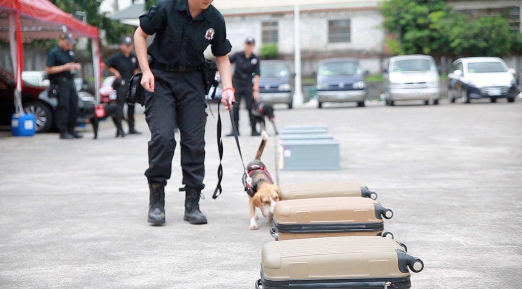 台中市警犬隊主要任務是偵毒與防制爆裂物,嗅聞行李箱是必備技能。圖/台中市警局提供