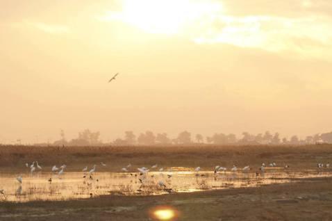 荒野上的凝視:濕地、荒地與開發主義的幽靈
