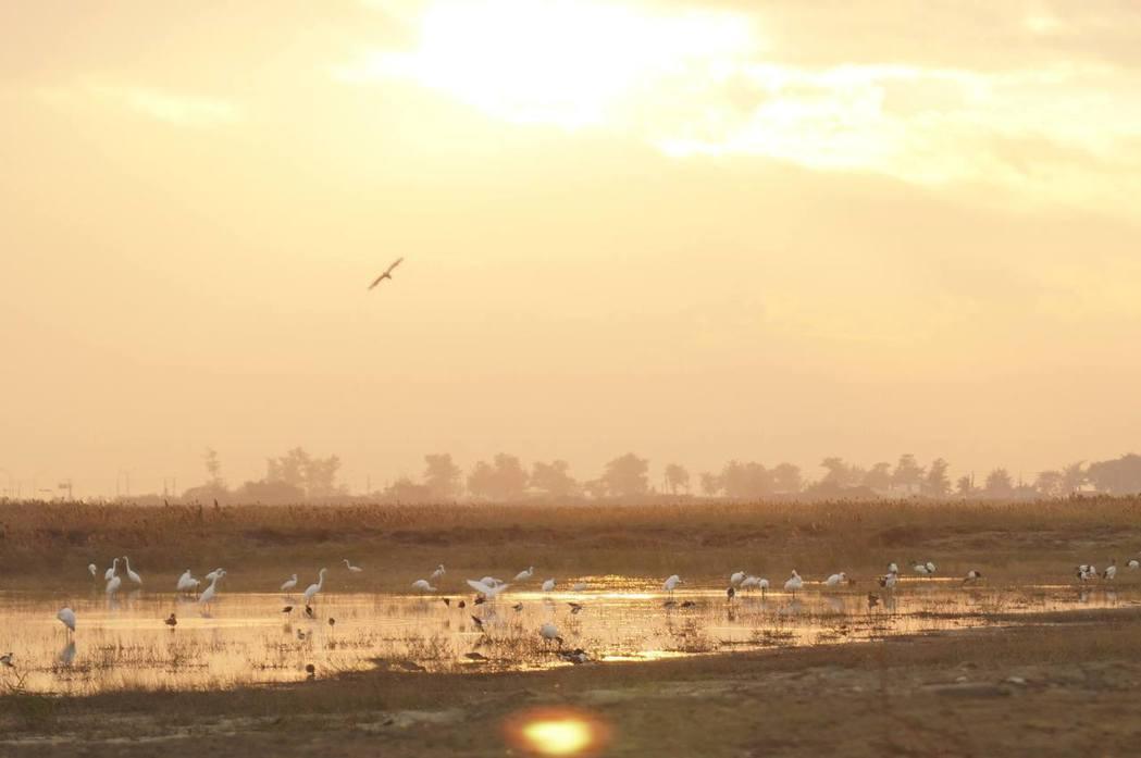 茄萣濕地每年有近300隻黑面琵鷺及140種以上的鳥類度冬,但高雄市與地方民意代表仍執意開發1-4號道路。 圖/取自守護茄萣濕地青年聯盟