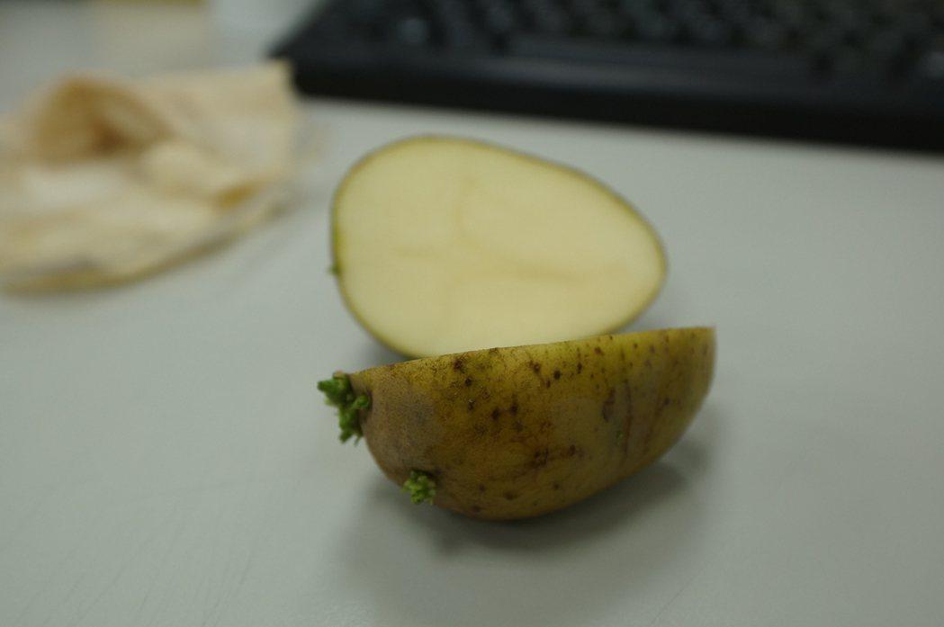 「綠薯條」的綠色有可能來自龍葵鹼。圖/衛福部食藥署