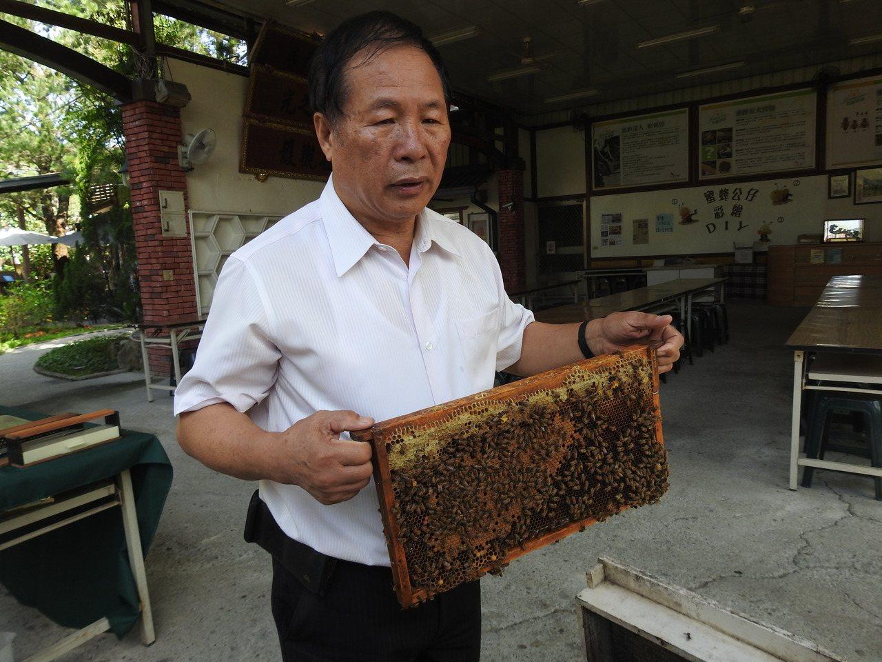 埔里蜂農賴朝賢拿起蜂箱巢框,因上頭蜜蜂稀落,深鎖眉宇因此無法紓解。記者賴香珊/攝...