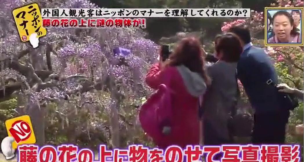 影片從第35分鐘開始,美麗的紫藤花被遊客摧殘。圖擷自dailymotion