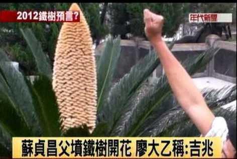 2011年4月蘇貞昌的「鐵樹開花傳說」。 圖/取自Youtube年代新聞