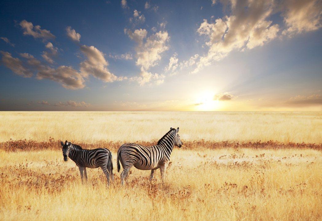 非洲大草原的落日美景。圖/ingimage