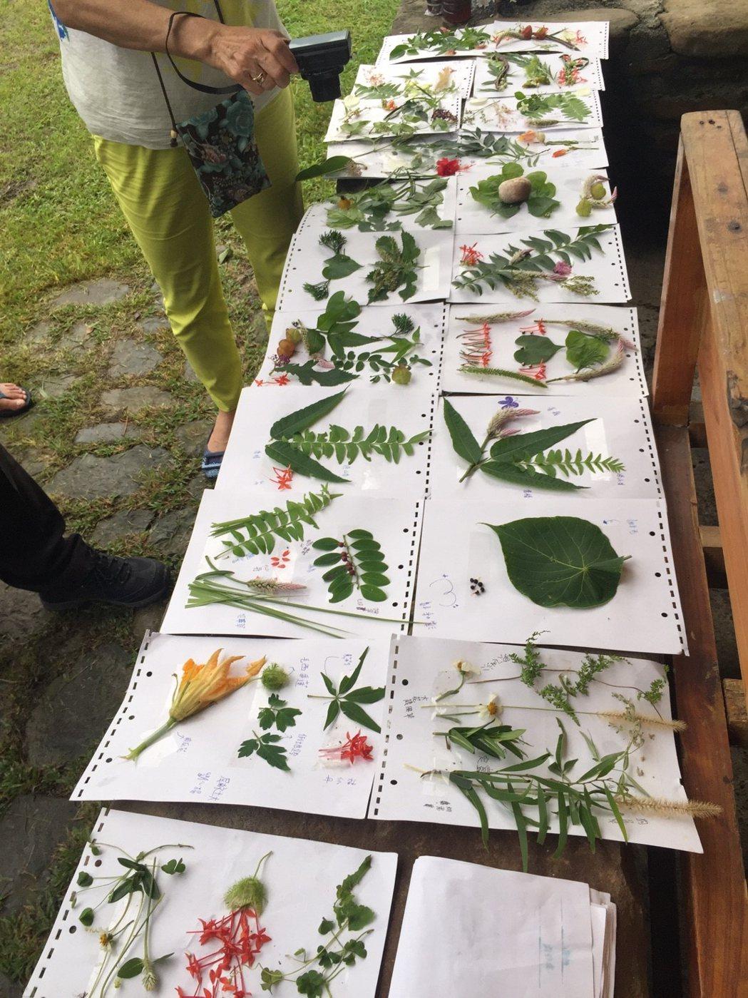 屏東恆春國小遊學提供學生體驗一系列的特色課程。圖/教育部提供
