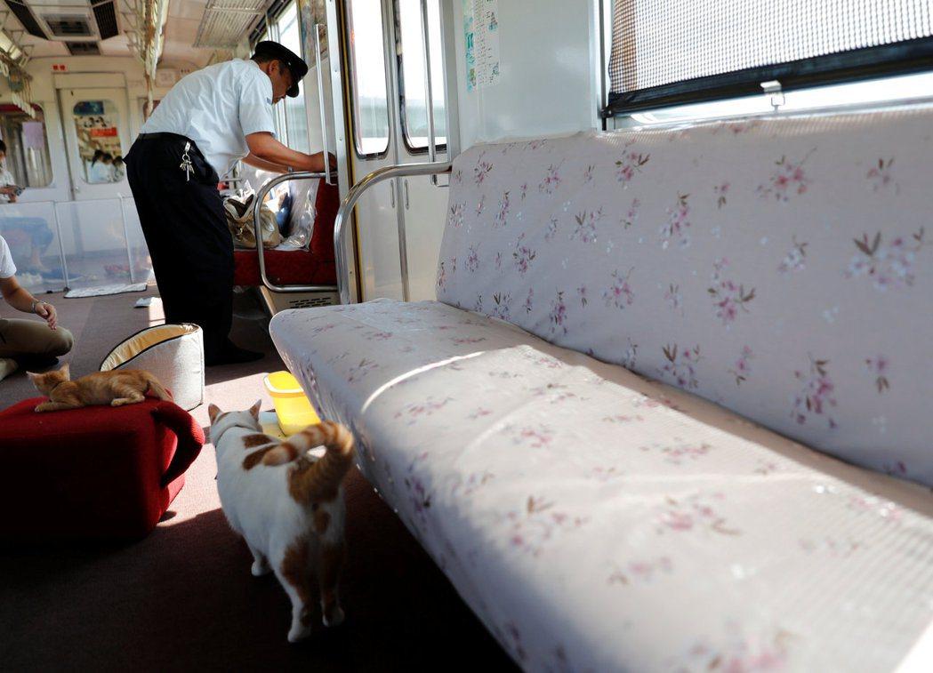 列車長將貓咪抱到座位上。路透