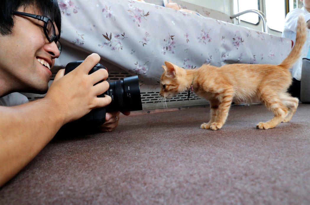 一位愛貓人士拿著單眼像機替小貓拍照,小貓則好奇地盯著鏡頭瞧。路透