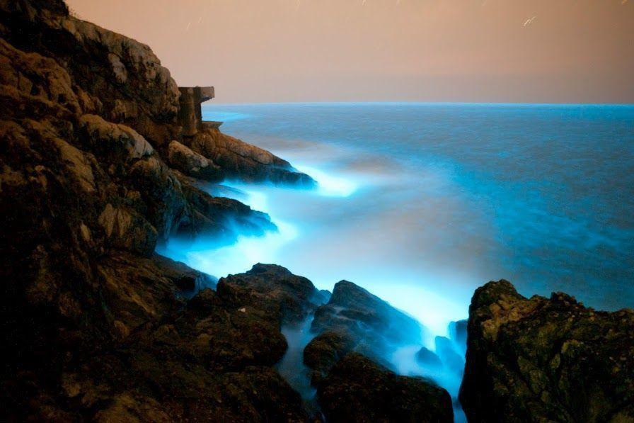 馬祖的藍眼淚是近年來非常熱門的生態景點。 圖/觀光局提供