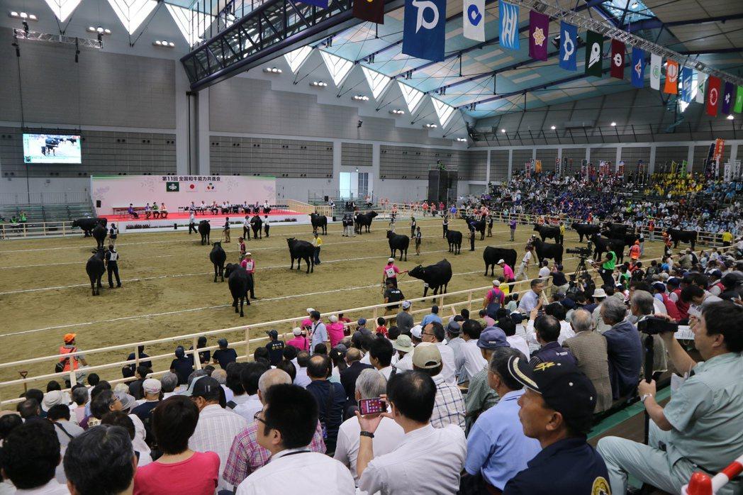 五年一度「和牛奧林匹克大賽」今年在宮城縣仙台市舉行,共有513頭和牛參賽,是歷來...