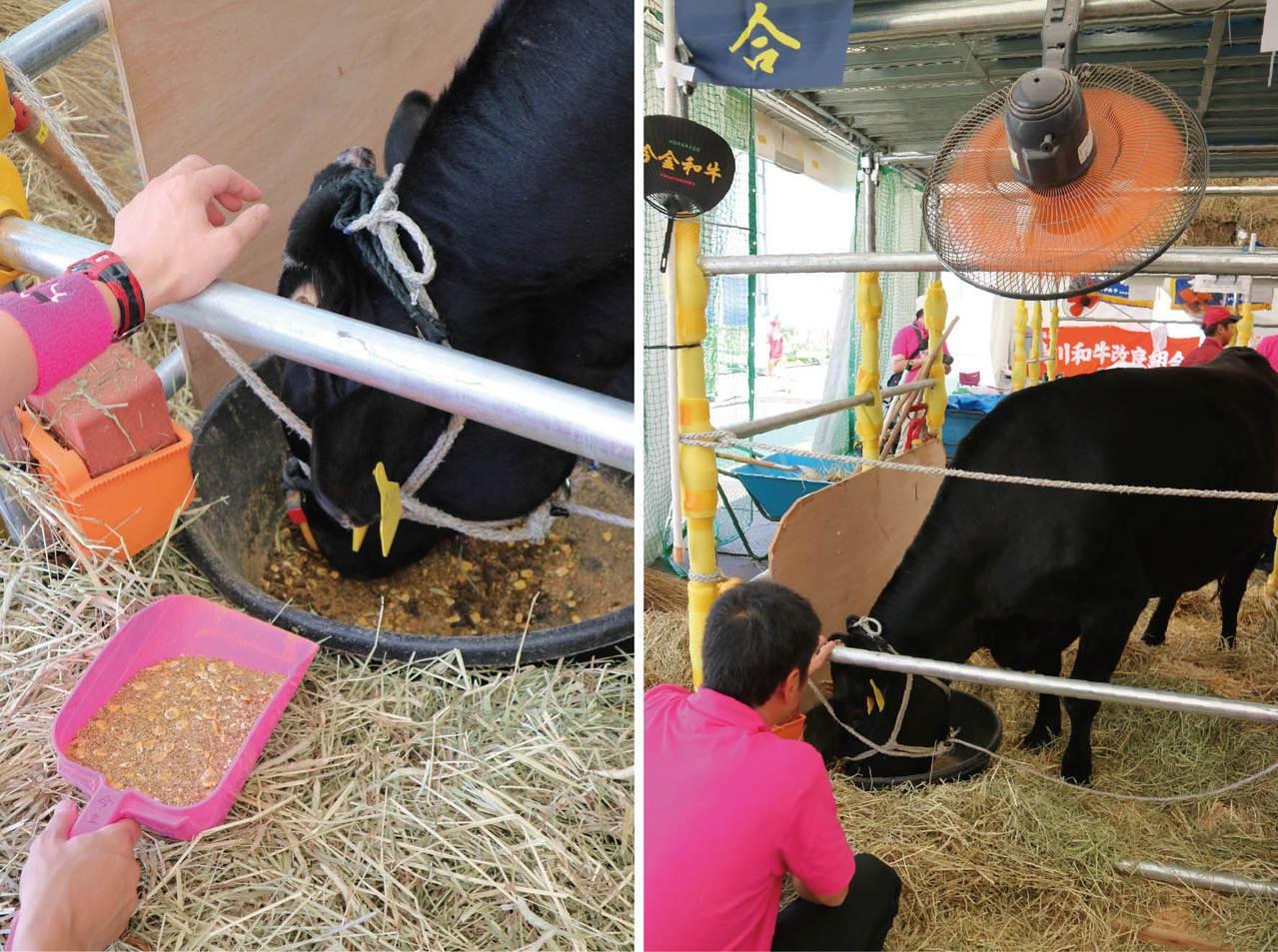 飼料對牛的美味深具影響,每家的配方都不同(左圖),另外北海道牛是現場少數吹電扇享...