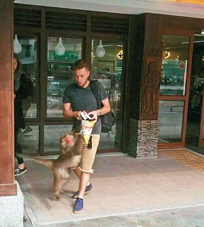 太魯閣國家公園裡的天祥遊憩區,獼猴搶食遊客食物的案件幾乎天天都上演。 圖/賴姓讀...