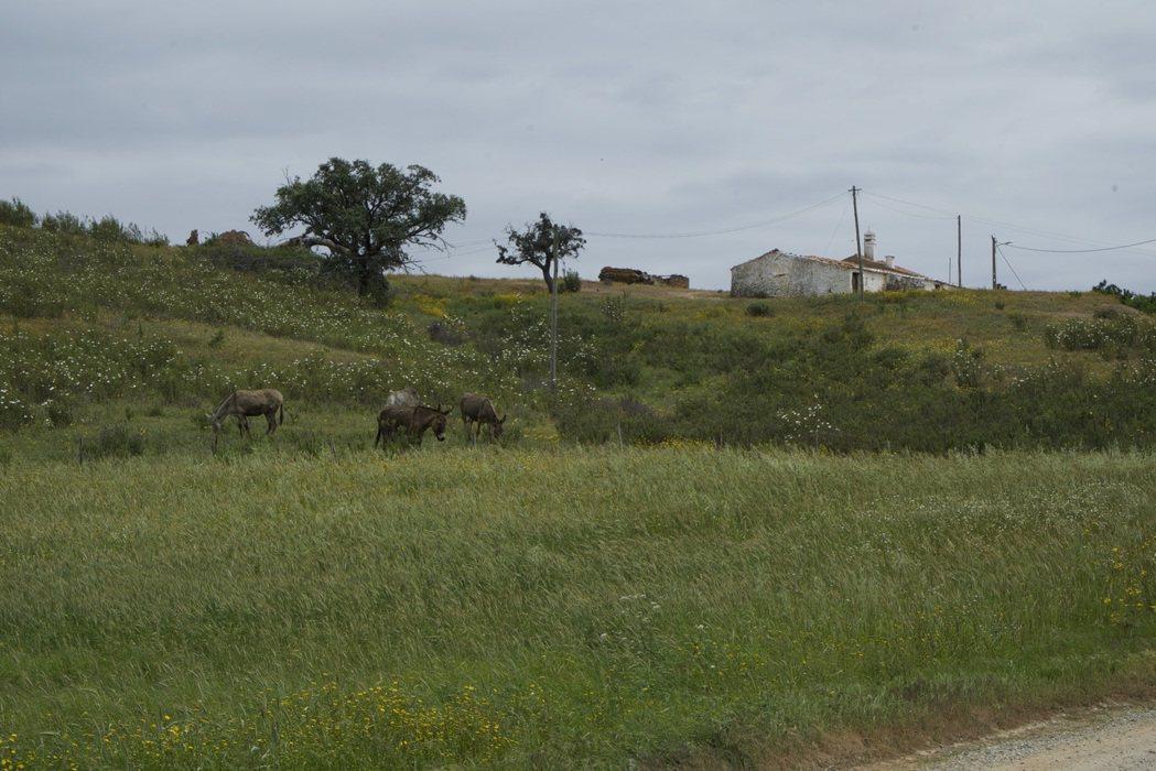 事實上整個南方平原阿連特茹,可以說是葡萄牙殖民擴張歷史的陰暗面。圖為阿連特茹地景...