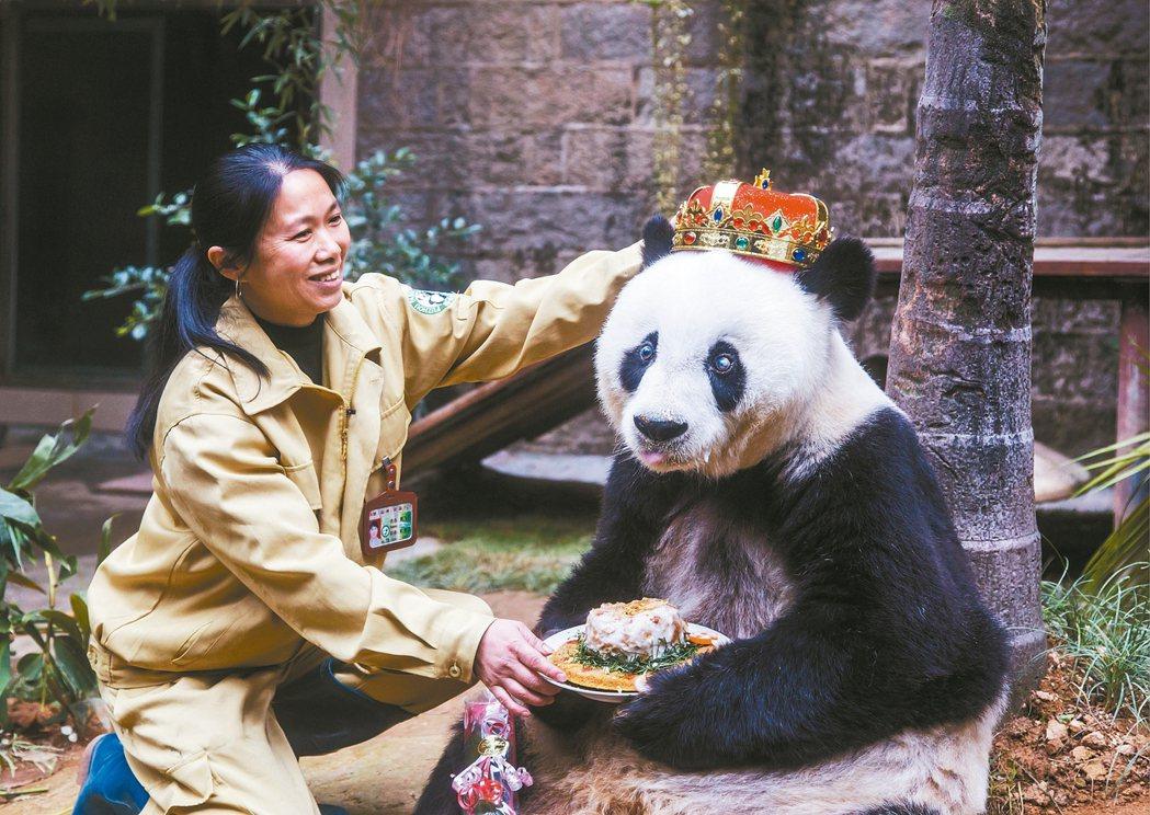 中國大陸最長壽的大貓熊巴斯,二○一五年戴著皇冠慶生吃大餐。 美聯社