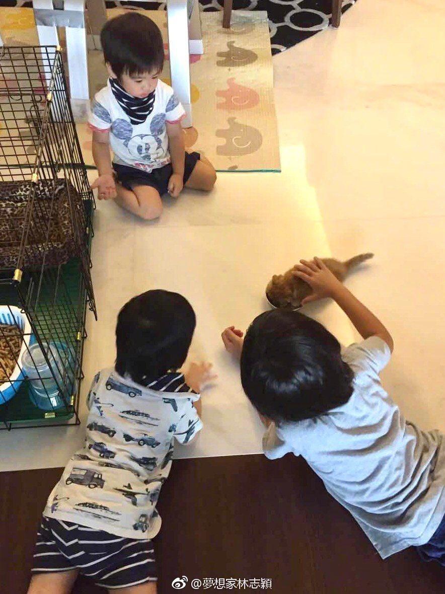 Kimi 8歲生日,獲得一隻小貓咪。圖/擷自微博