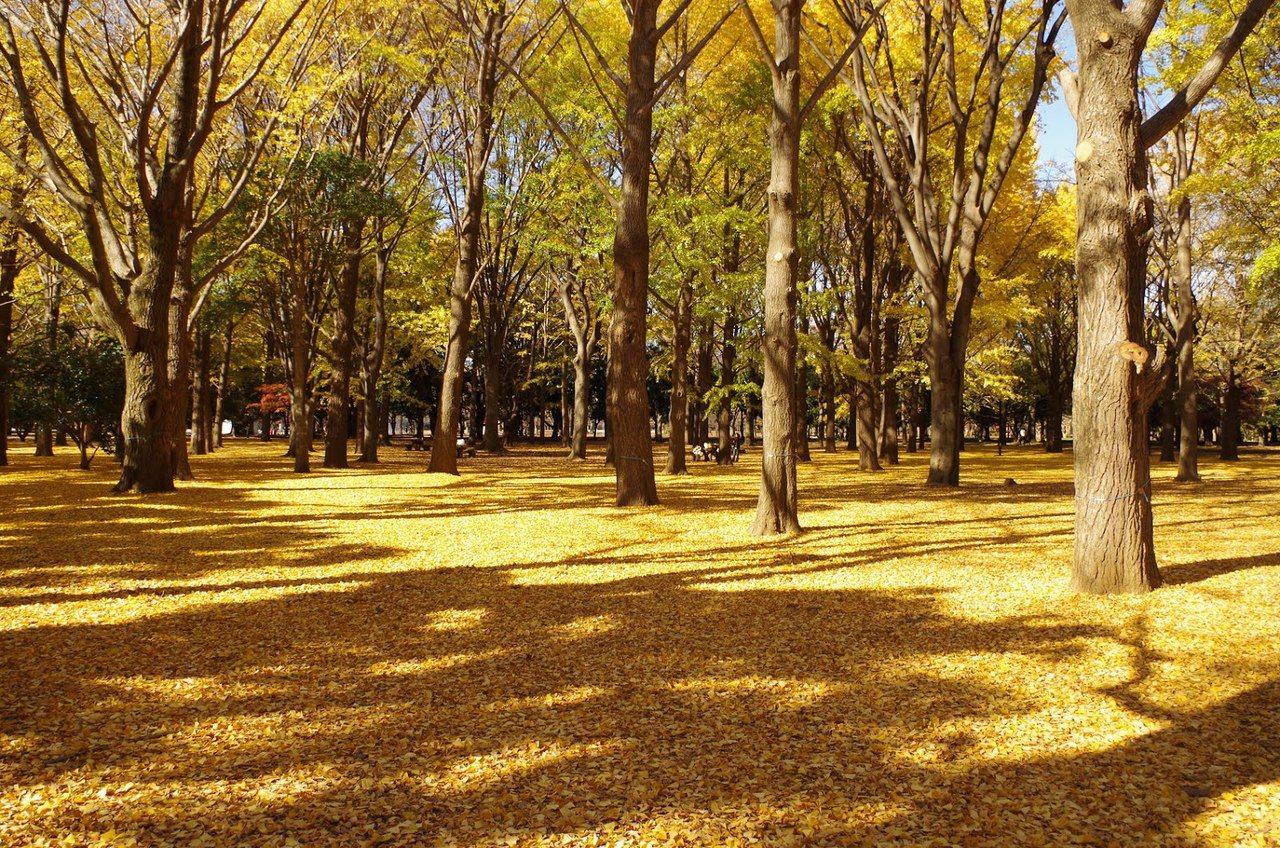 日本東京代代木。圖/KKday提供