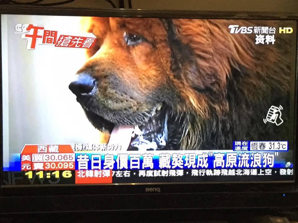 嘉義黎明狗學校犬隻訓練士、校長蔡慶榮,拒收大型獒犬,他對大型或超大型狗怕怕的,只...