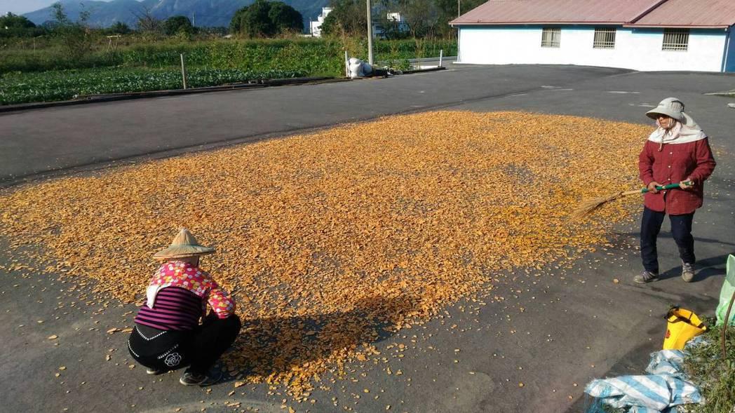 「小林人」延續家鄉薑黃產業,在自宅屋前曬薑黃。圖/日光小林社區提供