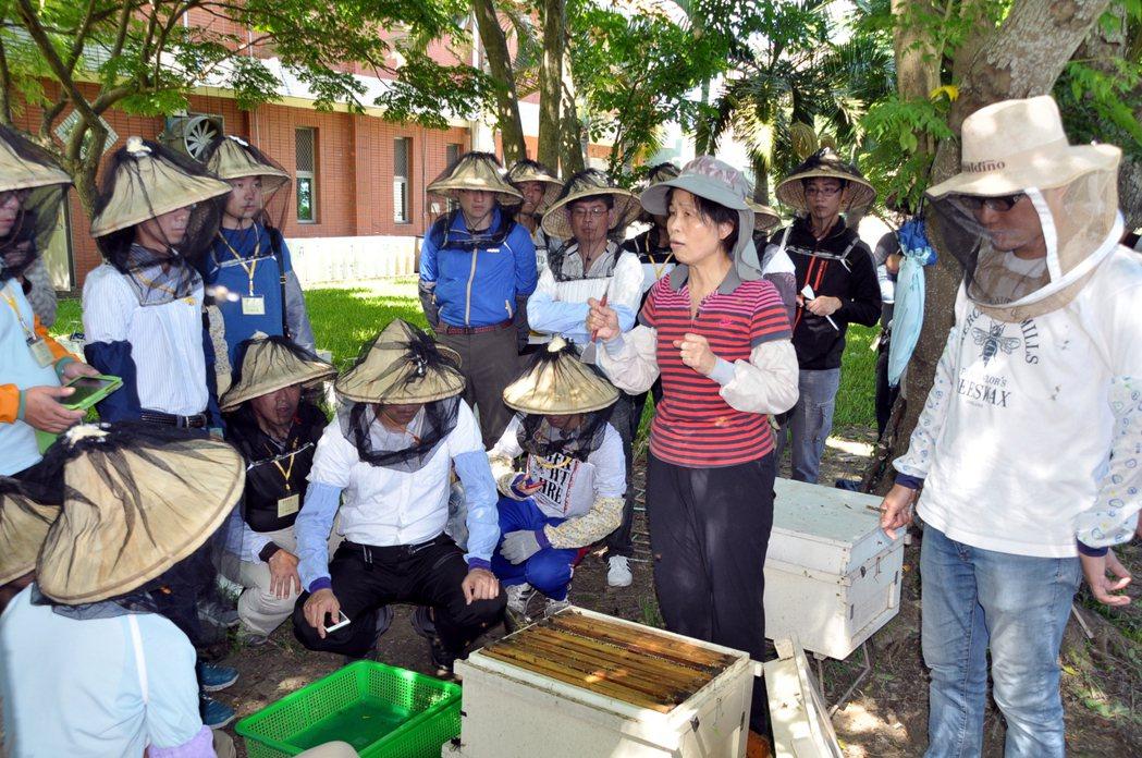 業餘及都市養蜂成了新蜂潮,苗栗區農業改良場農民學院的養蜂入門班非常熱門。圖/苗栗...