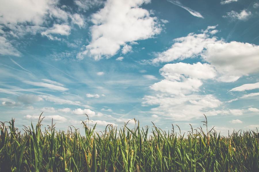 未來一週天氣相對穩定,多雲到晴為主。(photo by Pexels)