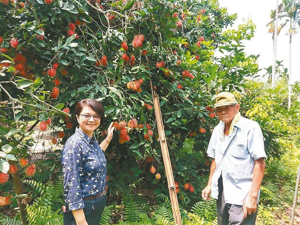 雲林縣80歲農民莊雅雄(右)以日式職人精神細心照顧紅毛丹,培育出可口誘人的果實,...