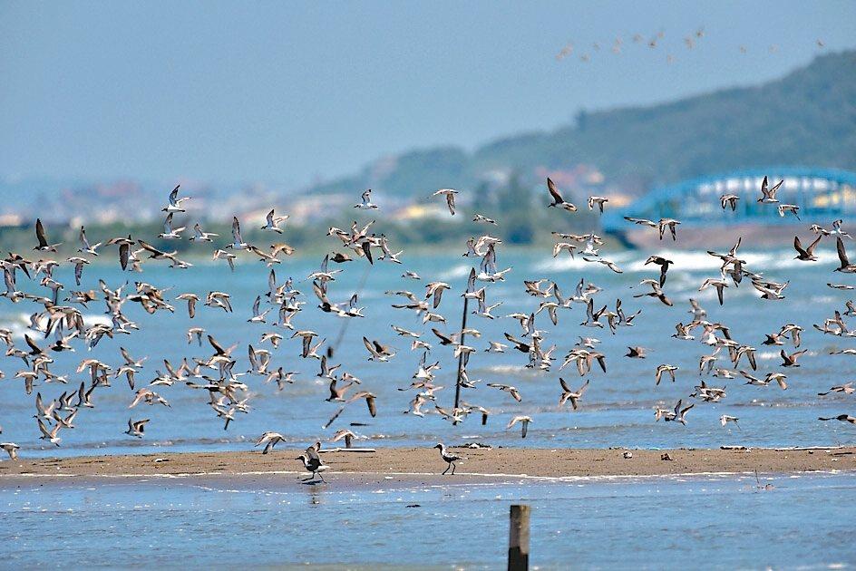新竹市南港賞鳥區具豐富自然生態景觀,是愛鳥人士秘境。 圖/新竹市府提供