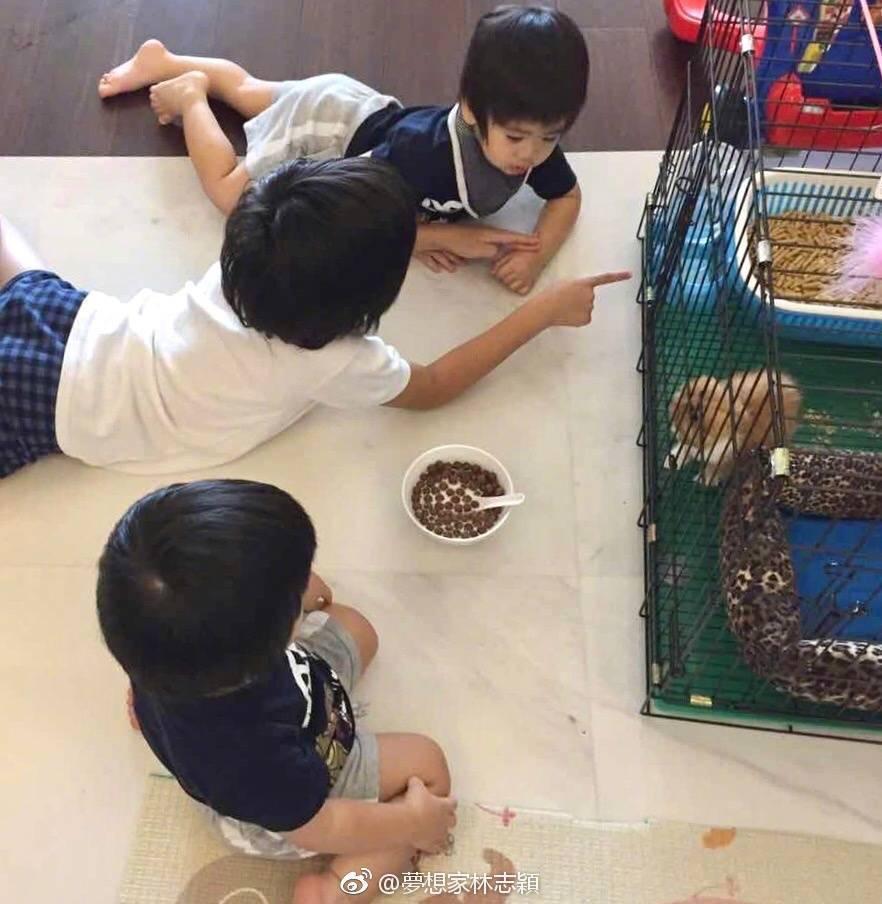 林志穎兒子生日送貓,卻引來爭議。圖/摘自微博