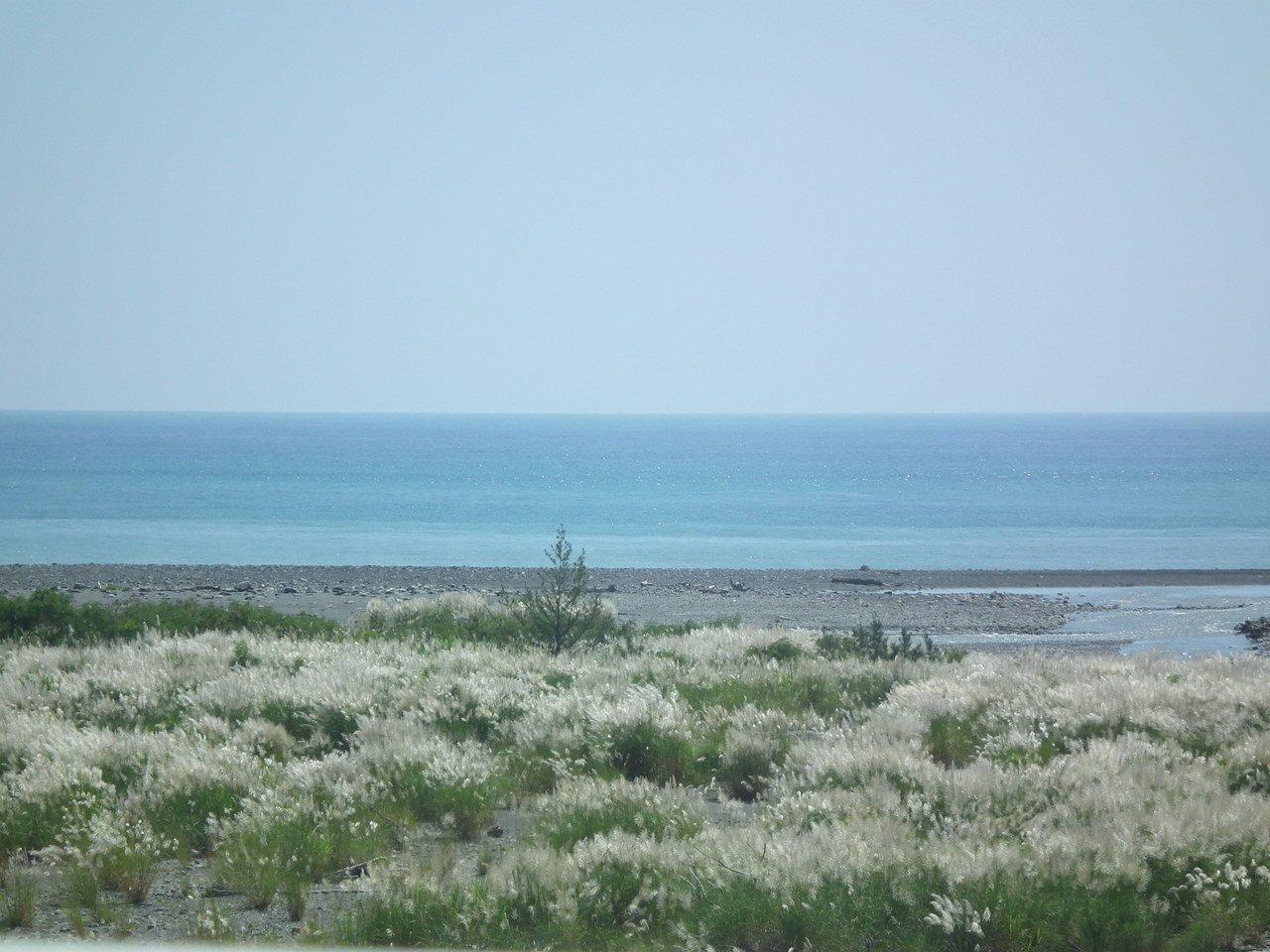 南迴河床上的芒草花海,是秋景一大特色,隨風搖曳,美不勝收。記者尤聰光/攝影