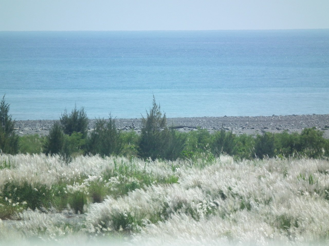 台東南迴數條河床上,一大片雪花般的芒草花和湛藍海景搭配,美景盡收眼底。記者尤聰光...