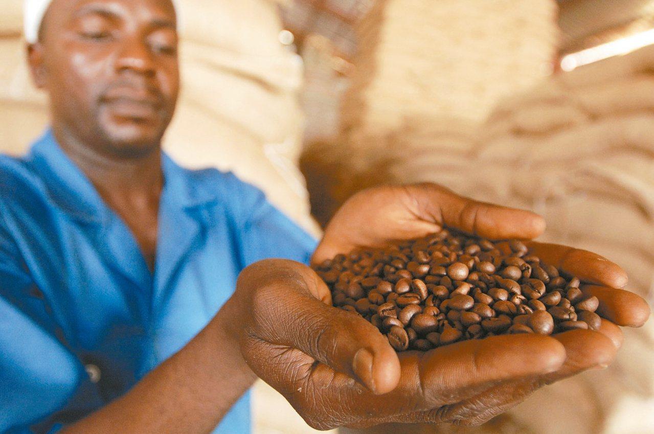 剛果精品咖啡潛力無窮。 法新社
