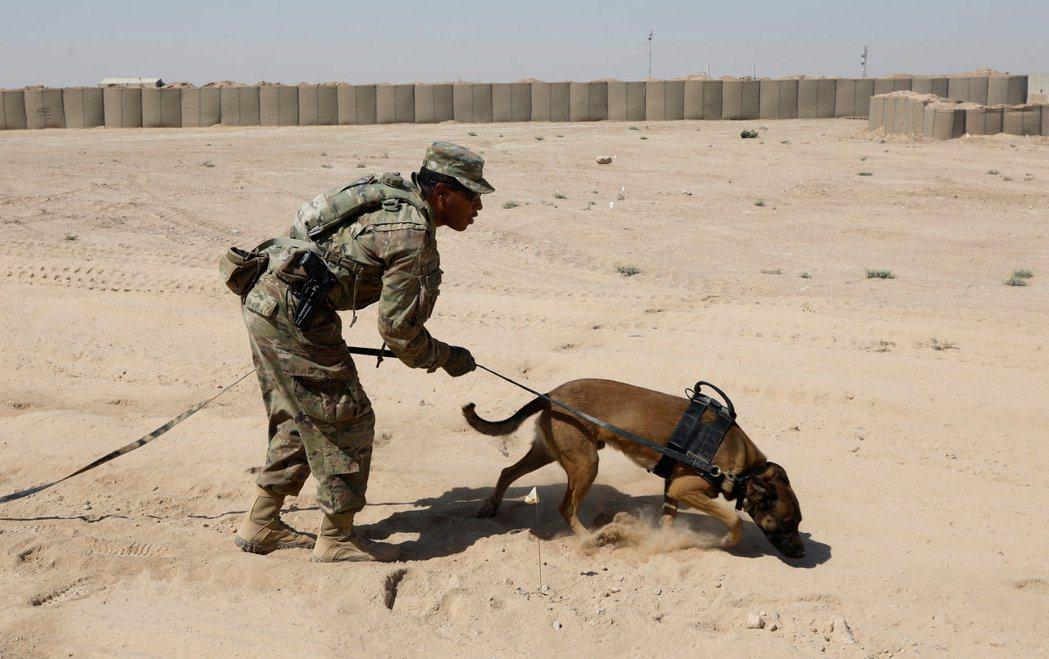 一名美軍正在摩蘇爾以西的奎亞拉空軍基地,訓練專門搜尋爆裂裝置的軍犬。 ...