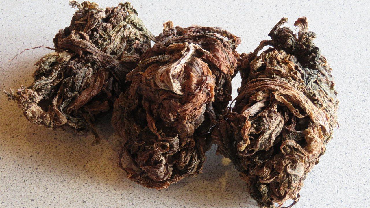 芥菜經醃製酸菜熟成,繼續日曬到乾燥,製成梅干菜(鹹菜乾)。記者張弘昌/攝影