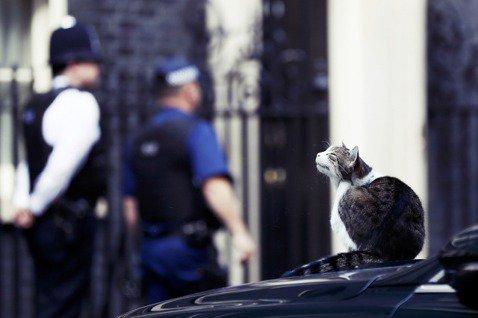 「一轉眼,英國脫離歐盟的公投已經過了一年多了呢...」 圖/路透社