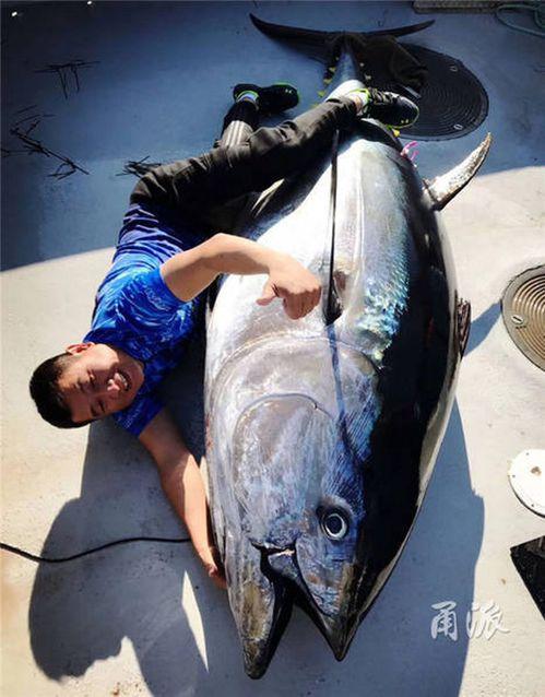 藍鰭金槍魚。取自中國寧波網