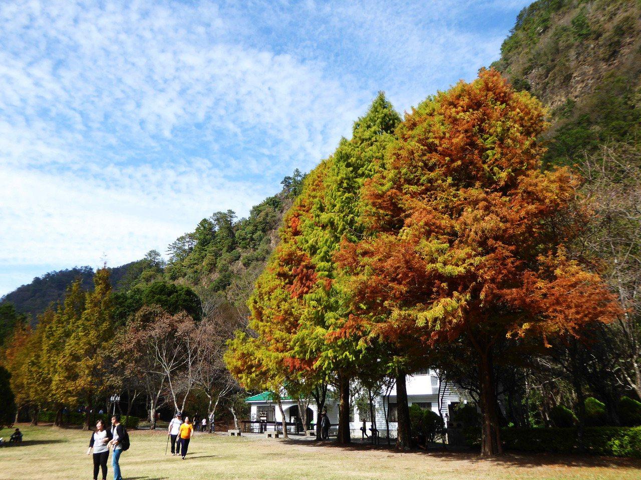 奧萬大國家森林遊樂區。圖╱南投林管處提供