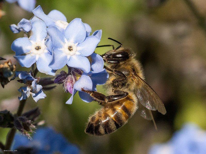 《聖經》提到流奶與蜜,當中的蜜可能是由蜜蜂生產。(Photo by David ...