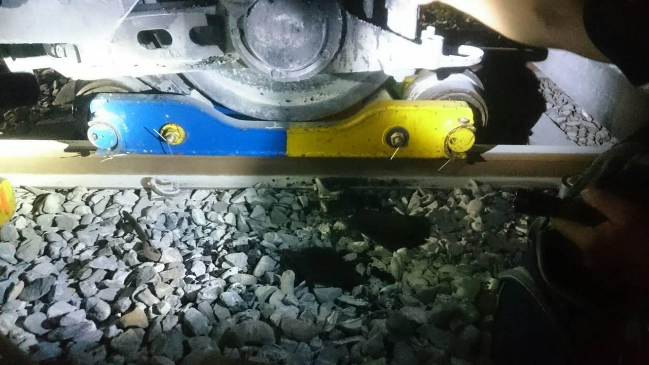 燒軸車輛於和平站上馱運車,準備送往花蓮車站途中,有再度出軌。圖/台鐵提供