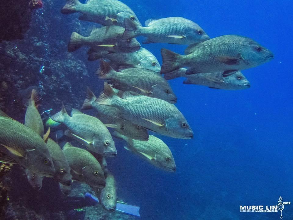 國立臺灣海洋大學海洋生物研究所教授陳義雄,在南方四島研究魚類群聚與生態,終於找到...
