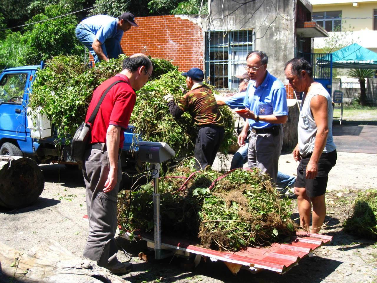 民眾將小花蔓澤蘭繳交至南投林管處收購點進行秤重。圖/南投林管處提供