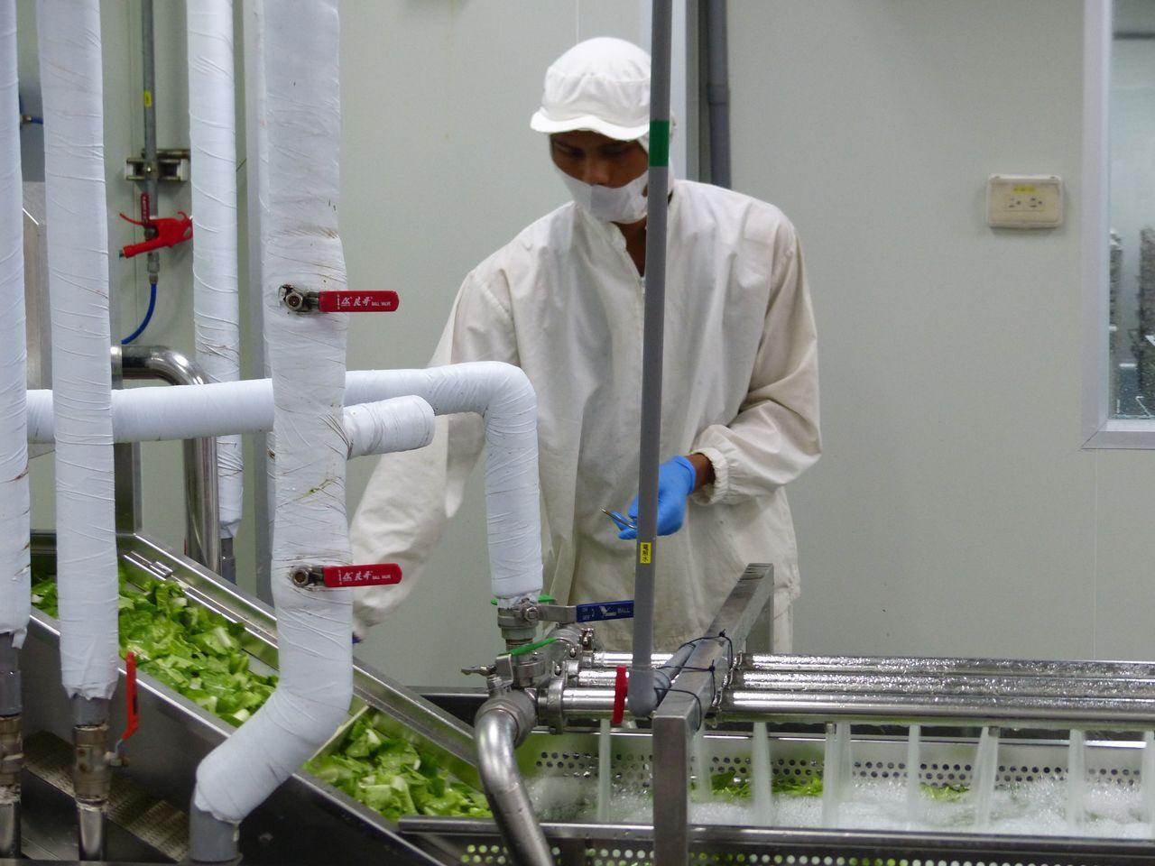 農委會副主委陳吉仲參觀玉美研究科技農場洗切蔬菜的情況。記者趙容萱/攝影