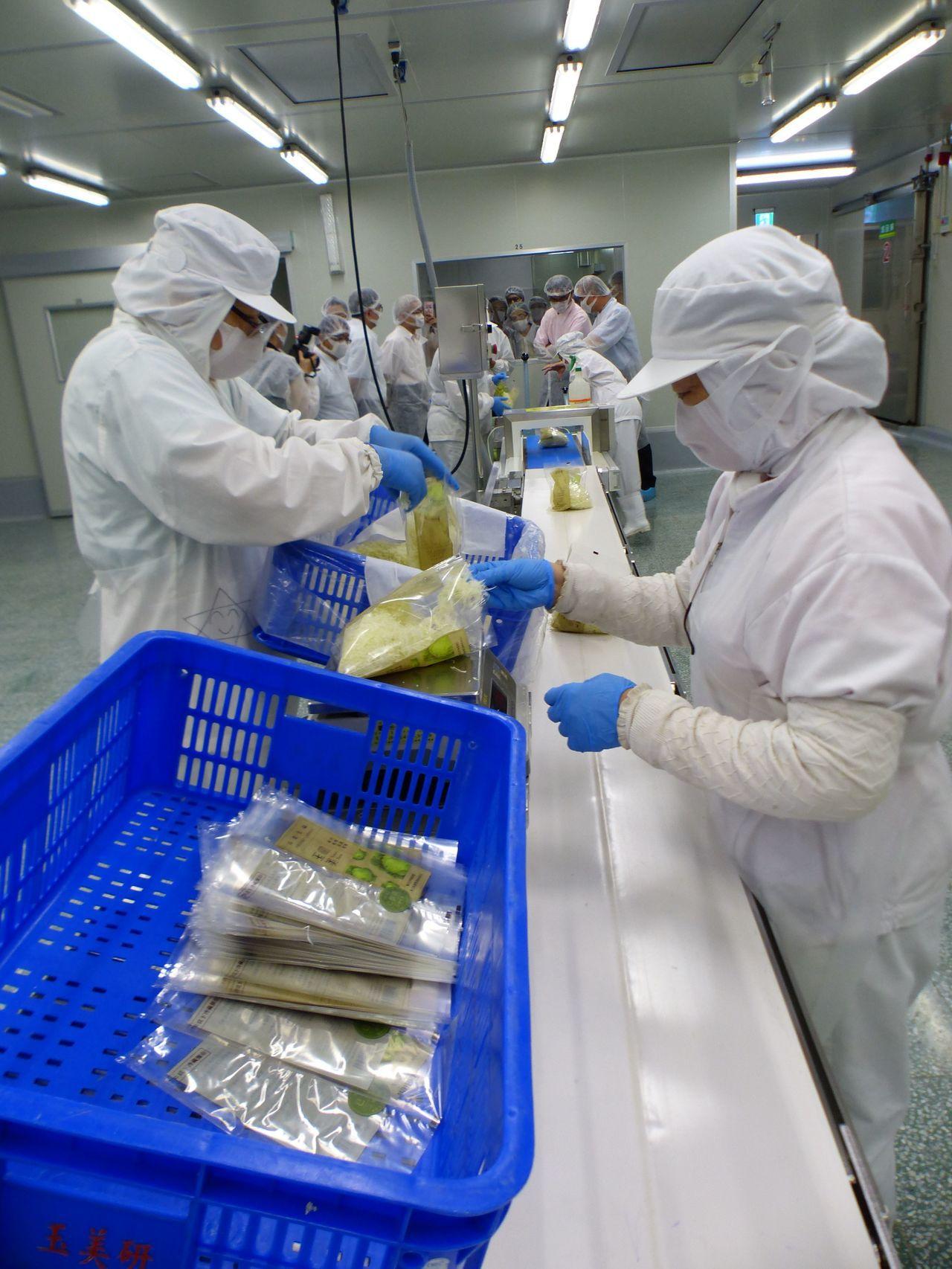 農委會副主委陳吉仲參觀玉美研究科技農場,了解截切蔬菜過程。記者趙容萱/攝影