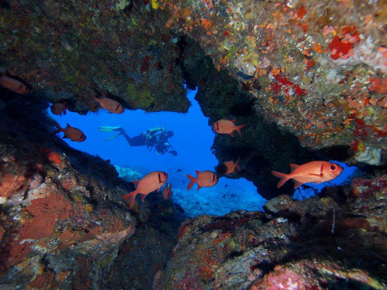 綠島的海底世界美麗猶如奇幻的水晶宮。圖/馬來西亞潛水攝影家Tim Ho提供