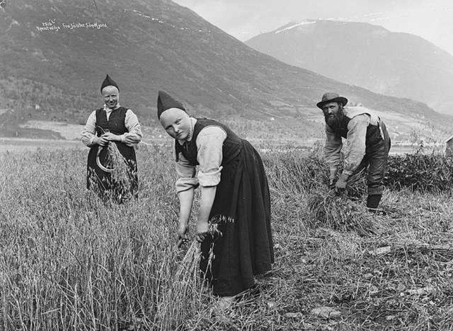 挪威的都市化和工業化,被認為是削弱新挪威文地位的主要原因,因為人們常會將「新挪威...