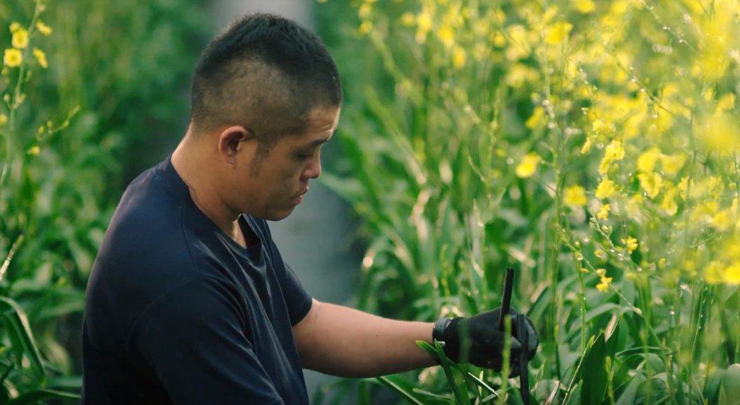 文心蘭是台灣出口花卉主力,外銷以日本為主。圖/台中市新聞局提供